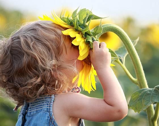 Pěstování slunečnic je snadné a baví i děti