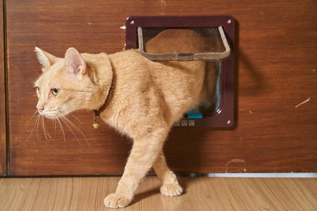 Kočky se protáhnou velmi malými dvířky