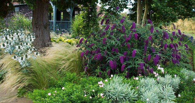 Komule Davidova a okrasné trávy