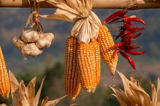 Velmi dekorativně působí usušená kukuřice, navlečené chilli papričky a česnek.