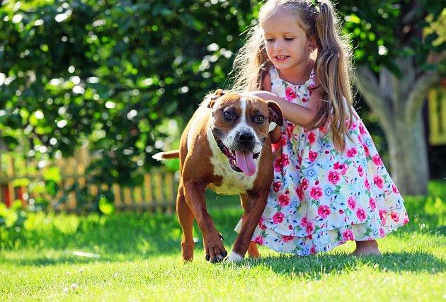 Americký stafordširský teriér děti miluje.