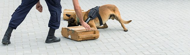 Belgický ovčák na hranicích