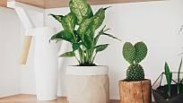 Pozor na celou řadu jedovatých rostlin, například difenbachii, ta rozhodně do dětského pokoje nepatří.