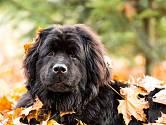Top 10 nejvěrnějších psů