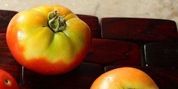 Poruchy zrání rajčat způsobuje příliš vysoká teplota i intenzivní sluneční záření