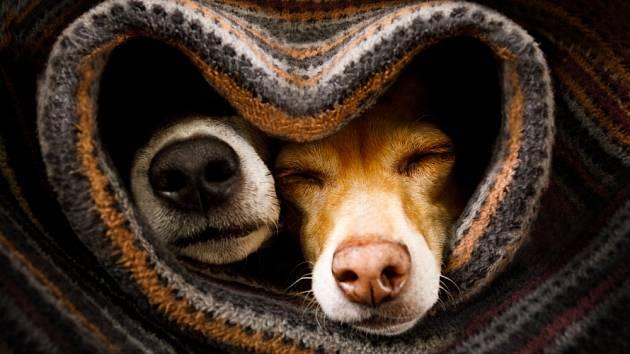 Různá plemena psů mají různý počet čichových buněk.