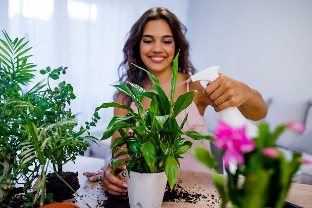 Postřik z lihu pomůže i pokojovým květinám.