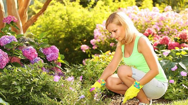 Můžeme zahradu nachystat na horké letní dny?