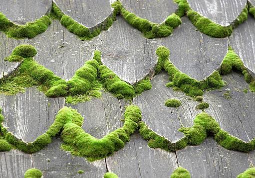 zarostlá dřevěná střecha