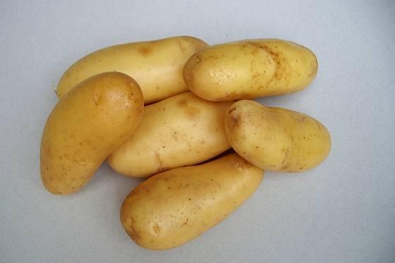 Odrůda brambor Anabelle