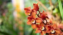 Mohutná orchidej v závěrečné části skleníku Fata morgana.