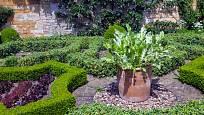 Křen můžeme pěstovat také v nádobách.