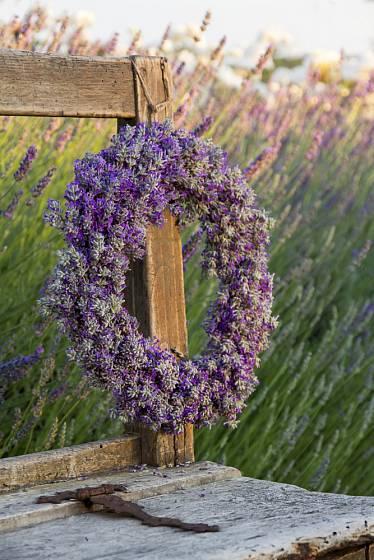 Levandulový věnec musíte splétat z čerstvě ustřižené rostliny.