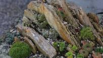 Spárovou skalku můžeme osadit i doma namnoženými skalničkami