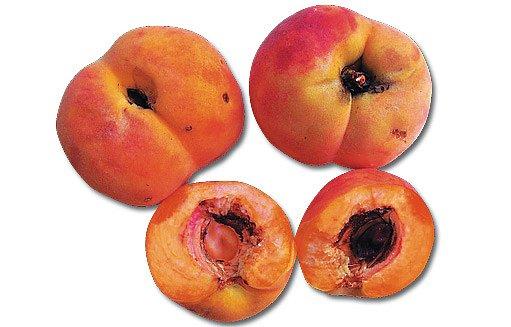 poškozené plody broskví