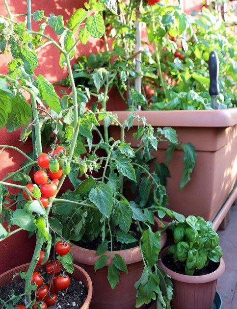 Rajská a papriková zahrádka uvítá, když do ní vysázíte i bylinky.