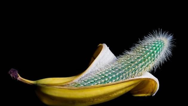 Potřebujete přesadit kaktus a nechcete se popíchat? Použijte slupku od banánu jako ochranu vašich rukou a využijte ji jako chňapku.