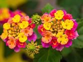 Květiny, které mění barvu svých květů – to zní spíš jako pohádkové kouzlo