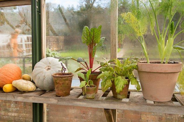 Otužilá listová zelenina prospívá i v chladu