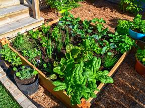 Na zasetí vlastní zeleniny ještě není pozdě.