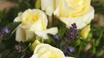 Růže odrůdy Limona