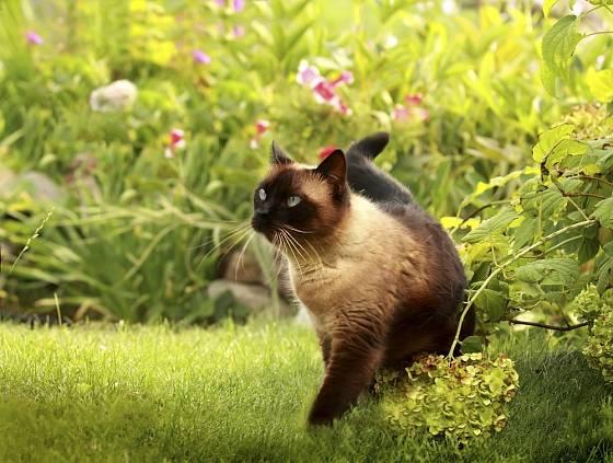 Kočky mají často políčeno na drobné ptactvo.
