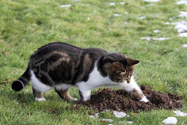 Trápí vás krtek? Pořiďte si na zahradu kočku.