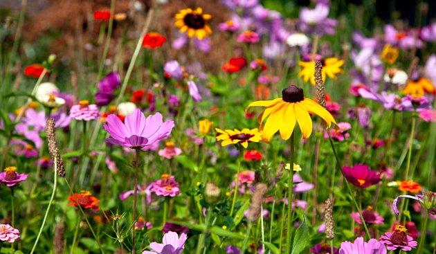 Pestrá výsadba, kterou ocení motýli i další hmyz.
