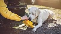 Nezapomeňte vzít psovi s sebou misku s vodou. Při delší jízdě je to nezbytné.