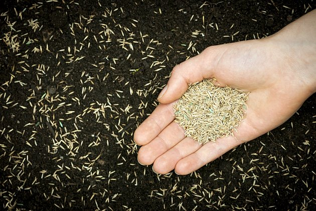 Místo běžného travního semena použijte účinnější prostředek ve formě trávníkové záplaty.