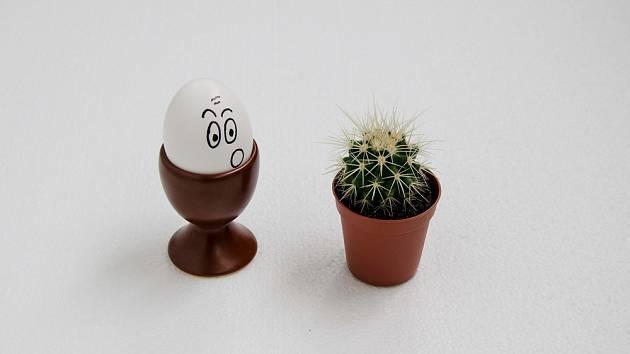 Trny z kaktusů vám nepomohou, ale stačí obyčejný špendlík.