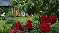 Mnohokvětá růže Jugendliebe