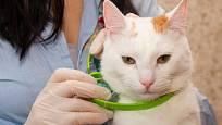 Antiparazitární obojek mohou nosit i kočky. Měl by však mít pojistku proti uškrcení