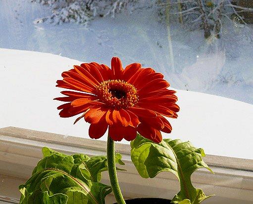 květiny za oknem