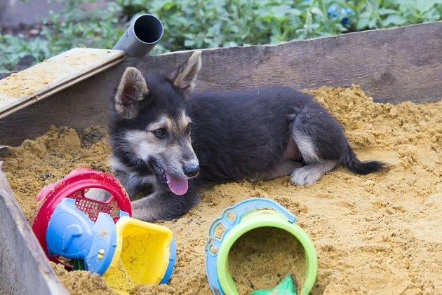 Pes do dětského pískoviště nepatří.