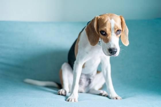 Někdy se stres u psa projeví na jeho fyzickém zdraví