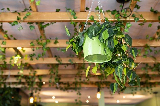 Ne každý je stejně nadšený z množství rostlin v bytě.