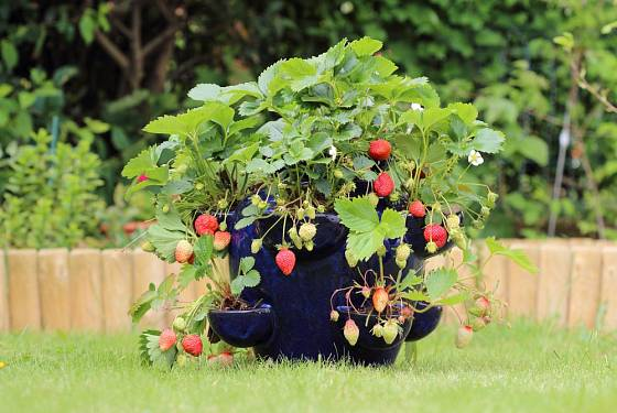 Speciální keramická vícepatrová kaskáda určená pro pěstování jahod.