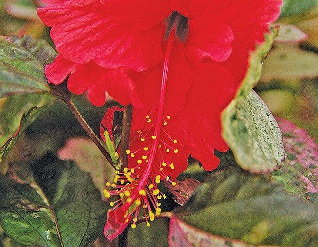 Sezóna začíná přesazováním a zmlazováním pokojových rostlin