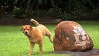 Vhodně umístěné kameny či patníky umožní psům značkování, aniž by docházelo k poškozování rostlin.