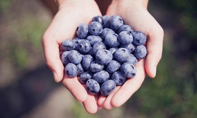 Borůvky jsou bohatým zdrojem vitamínů, minerálních látek a jsou plné antioxidantů.