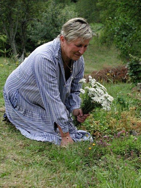 Vanda Vrlová při sběru bylin.