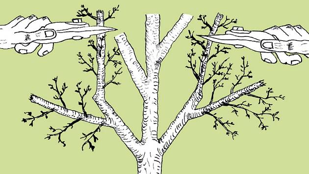 rez ovocnych stromu pdf download