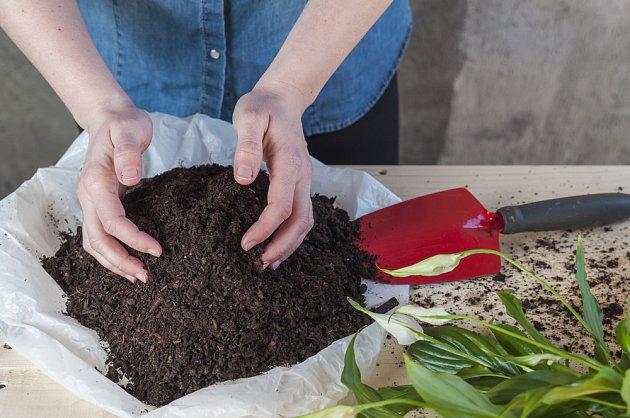 Listovku můžete využít i pro okojové rostliny