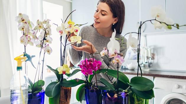 Vyzkoušejte na orchideje cibulové superhnojivo!