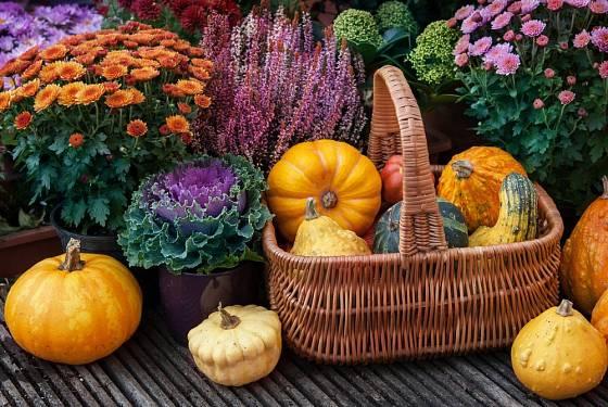 Rostliny v nádobách ideální pro podzimní krášlení zahrady: chryzantémy, vřesy a okrasné kapusty