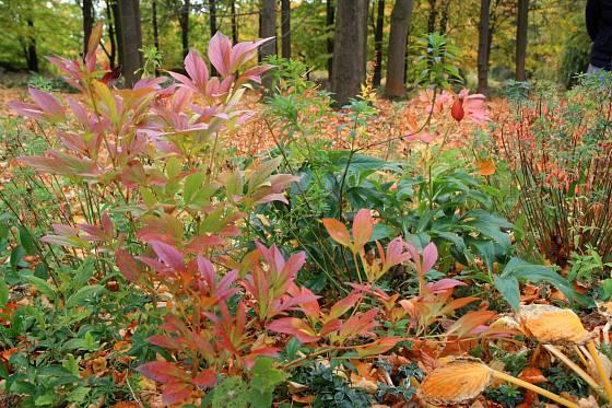 Trvalková směs vyvinutá v Průhonicích s názvem Český venkov je ideálním podrostem pod stromy