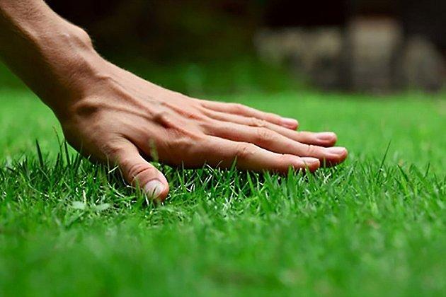 Dobrá péče se projeví na kvalitě vašeho trávníku.