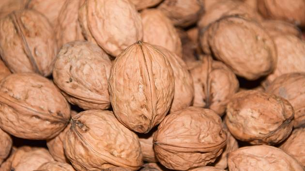 Ořechy, plody ořešáku královského.
