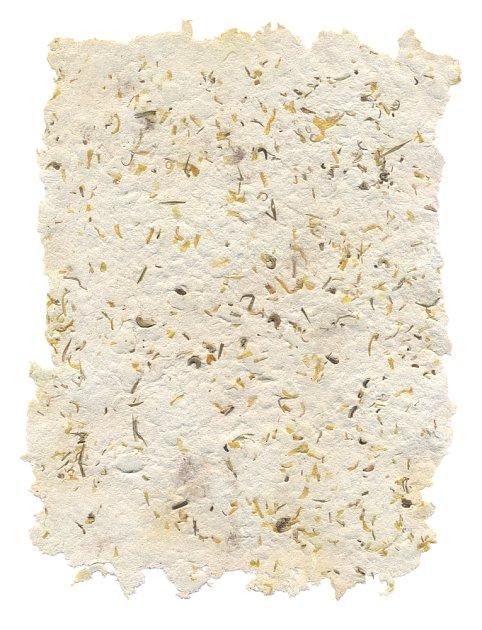 Výrobu plantable papers můžeme využít jako činnost k zábavě dětí.